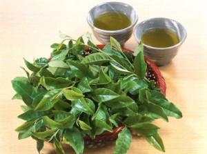 green tea 3 300x223 Lá vối tươi trị chứng bệnh viêm đại tràng hiệu quả